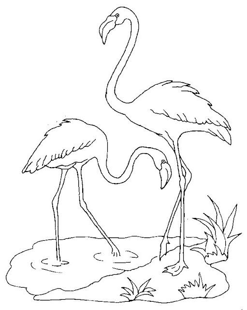 flamingo coloring pages - flamingo coloring