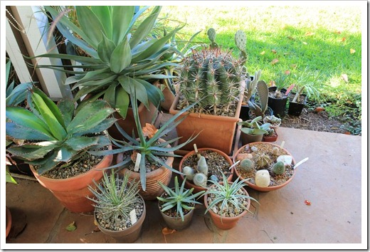121117_plants_on_porch1