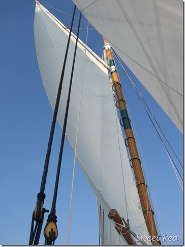 D1Boat8