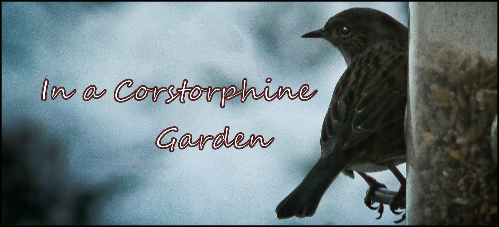 In a Corstorphine Garden