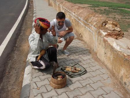 Imagini India: o cobra