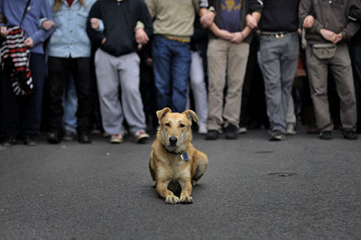 Loukanikos, the Greek riot dog