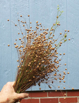 5 Acres & A Dream: Flax For Seed