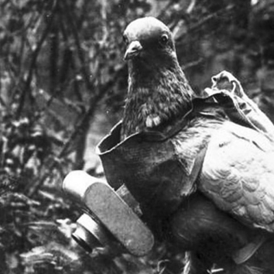 Pigeon Camera, 1908 - google it