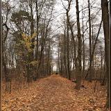 Waldweg am Müggelsee
