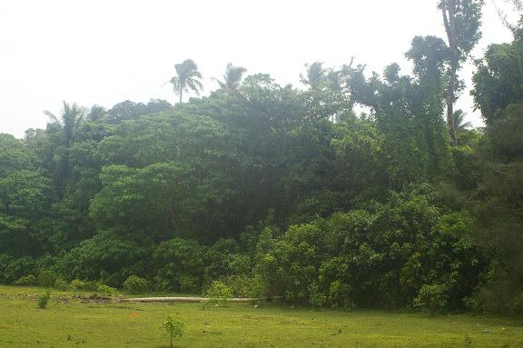 Biotope de Junonia atitles, J. almana, J. orythia. Pulau Mantanani (Sabah, Malaisie) 28 juillet 2011. Photo : J.-M. Gayman