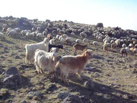 Iran Sabalan oile vin in vizita