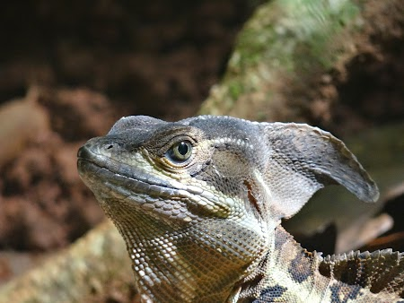12. Iguana.JPG