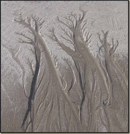 Trees in the sand