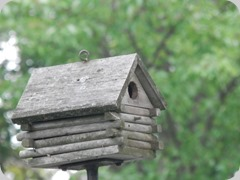 Our Old Bird house, now has a finch nest inside
