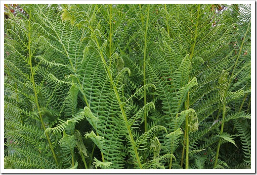 110712_fern_brookings