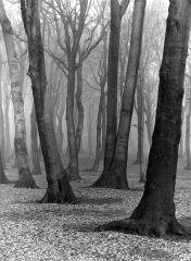 Albert Renger-Patzsch - Beech Wood - 1936