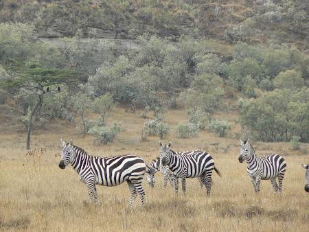 Safari Kenya: Naivasha