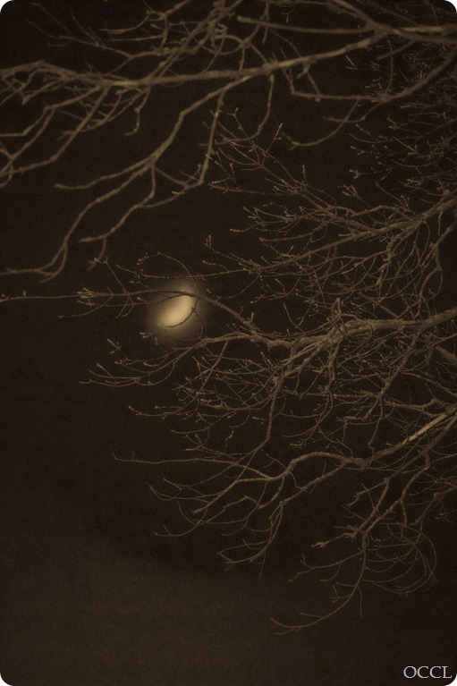 Foggy Moon (1 of 1)-2