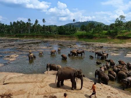 07. Elefanti la scalda.JPG