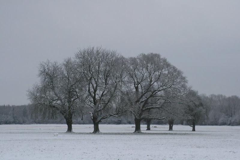 Snow in Castletown Gardens Celbridge-Karen O Hara.JPG