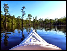 07b - paddling into the cypress swamp
