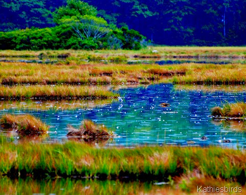 17. in the marsh-kab