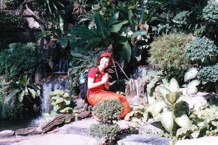 Imagini Thailanda: salut budist