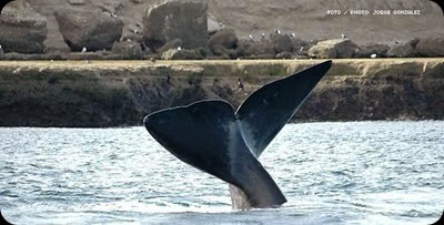whales in patagonia