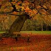 Resting Place-Jess Shiels.jpg