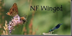 NF Winged f post 500d__1694
