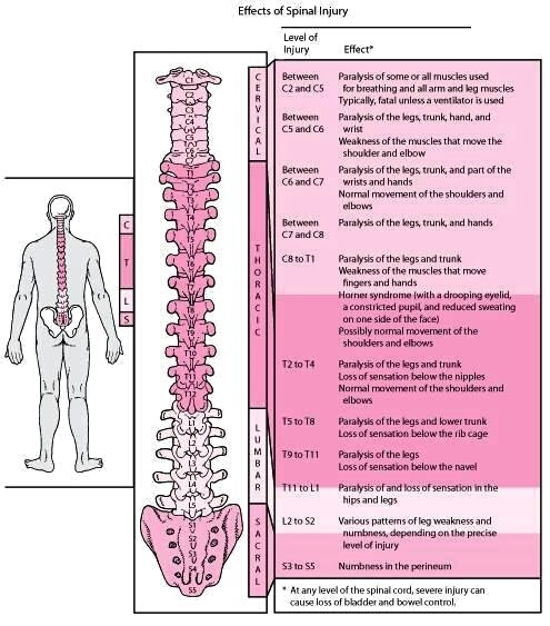 of spinal cord inj...