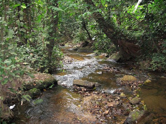 Wli Falls, Agmatsa Wildlife Sanctuary (Ghana), 12 janvier 2006. Photo : J. F. Christensen