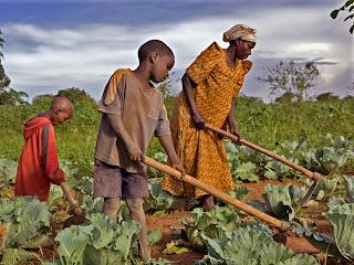 Madame Edith Kizito et ses deux enfants au champ en Uganda. legrandjournal.com.mx