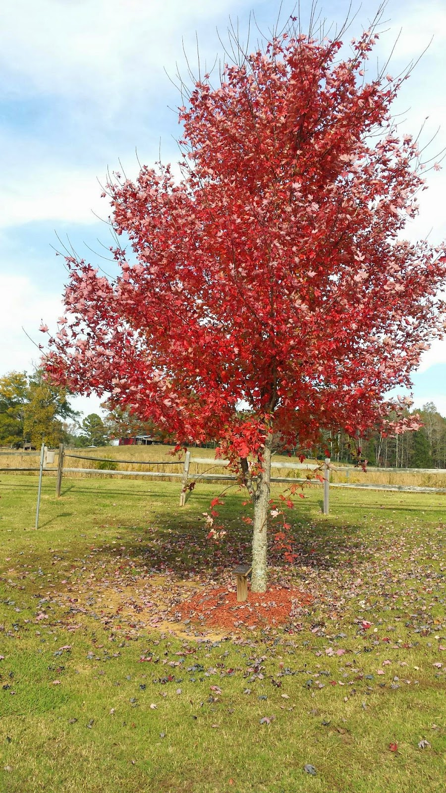 Tales From The Wood Booger: Quick Blog: Fall Colors At Kinsey Family ...