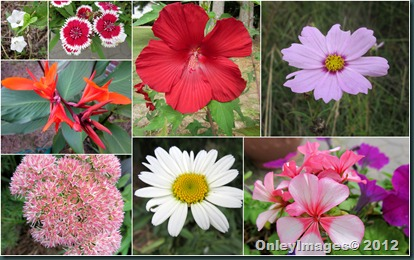 0924 unfall flowers collage