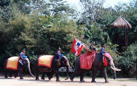 Show Thailanda: spectacol elefanti Bangkok