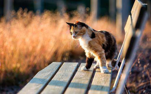 Kitten on Bench Wide