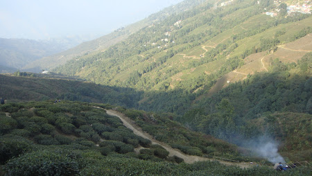 Imagini India: Happy Valley Tea Estate Darjeeling
