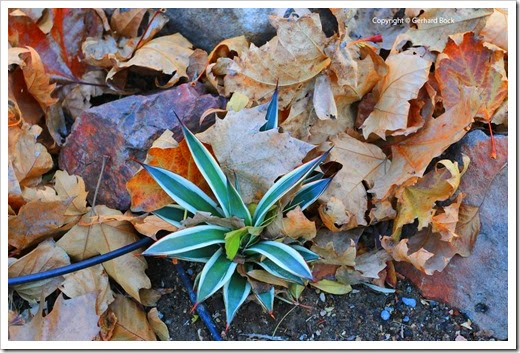 131122_home_leaves_06