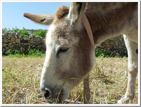 Donkeys (4)