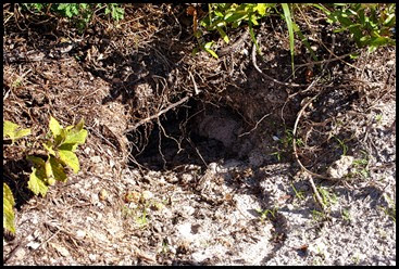 03e5 - Eagle Walk - Gopher Tortoise Burrow entrance