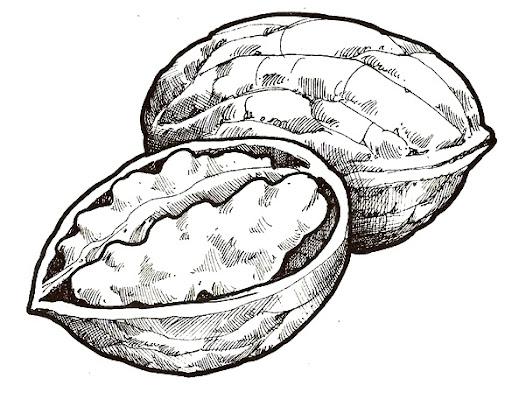dibujos para colorear nueces