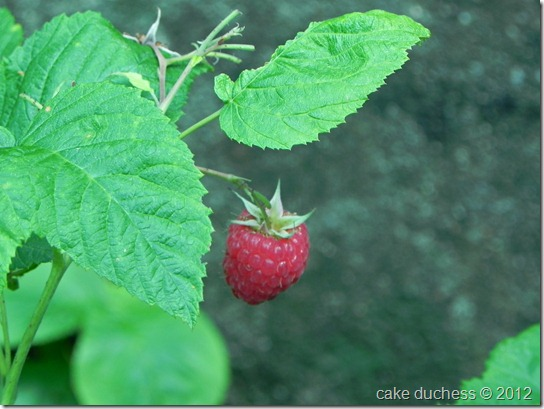 raspberry-picking-1