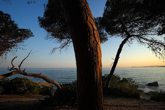 El bosc de la Marquesa, punta de la Creueta, espai natural protegit, extrem nord de la platja Llarga, Tarragona, Tarragonès, Tarragona