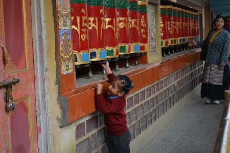 Noile generatii de tibetani