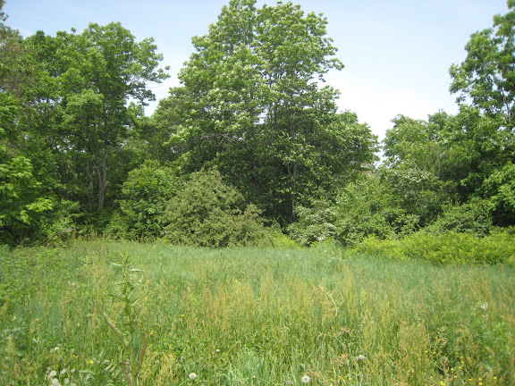 Tigrovoy : biotope de Parnassius stubbendorfii standfussi, 21 juin 2011. Photo : G. Charet
