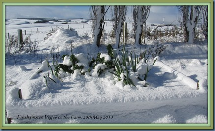 fresh frozen veges on the farm May 2013, framed