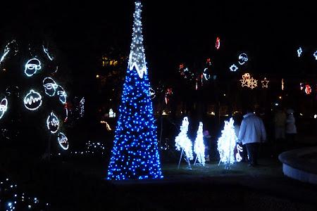 Brazi albastri in parcul IOR