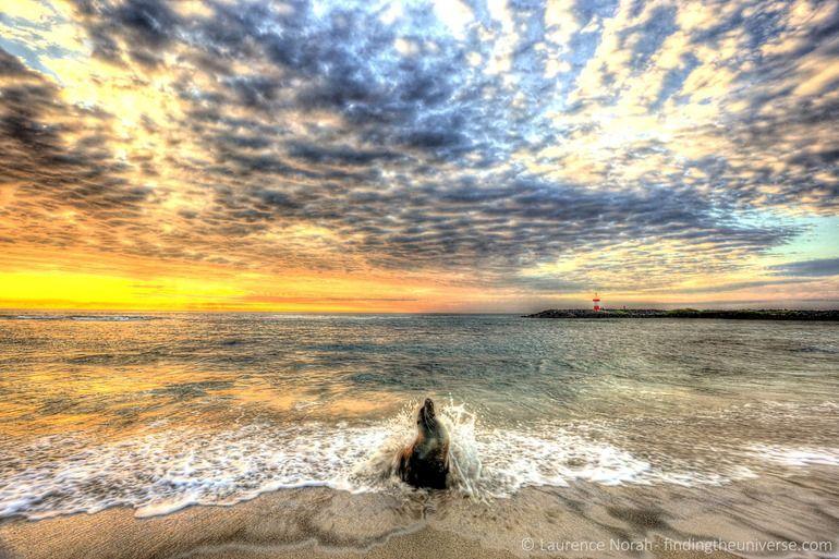 Sunset sea lion splashing Galapagos