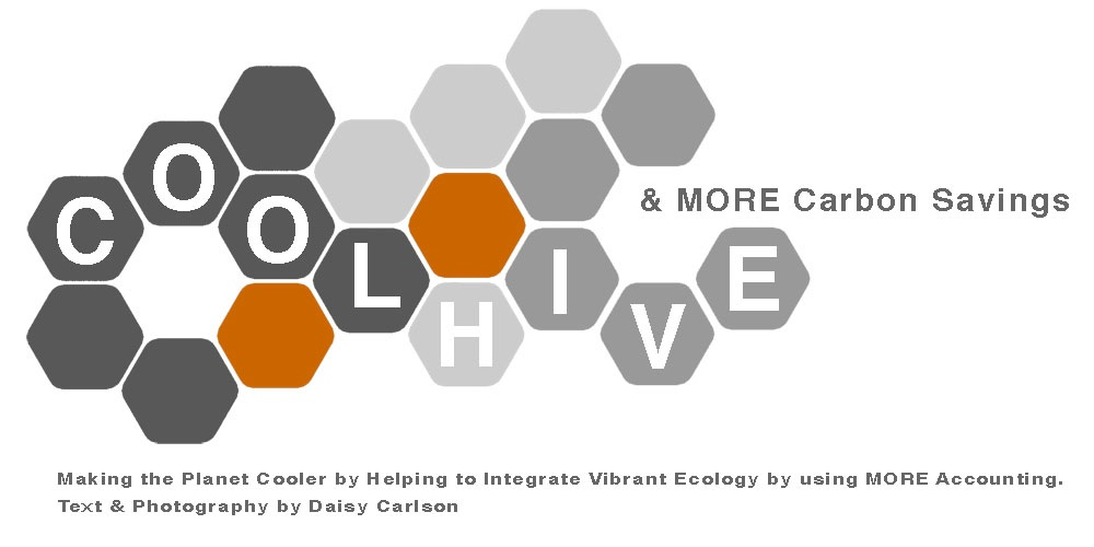 Cool HIVE & MORE Carbon Savings