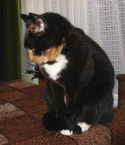 little-moon-cat-maantje-mijn-lieve-kat