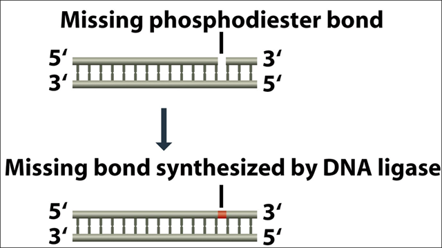 Ligase in rDNA technology