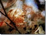 07_SA_Autumn_1264x1055