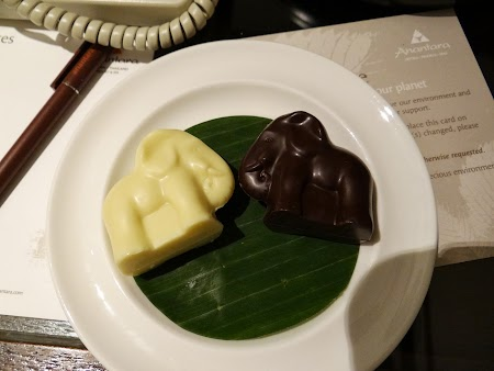 42. Elefanti de ciocolata.JPG